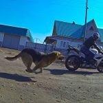 Perros vs motos?