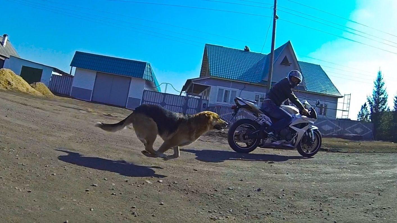Perros contra motos?